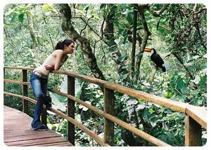 Explore the Jungle Wildlife of Iguazu