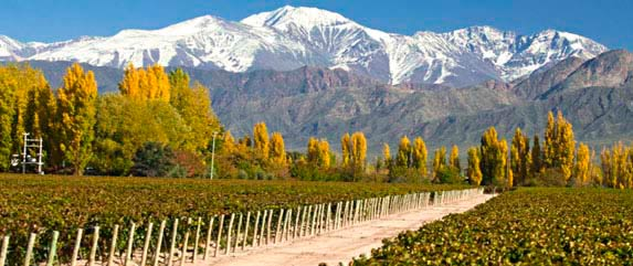 Tours in mendoza