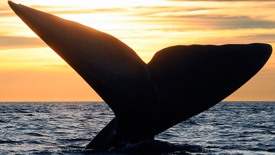 Puerto madryn whales