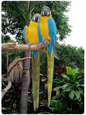 Come see the amazing wildlife of Iguazu!