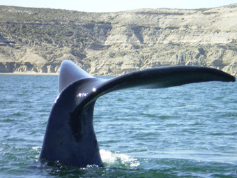 Explore nature in Puerto Madryn!