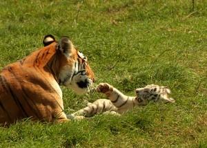Temaiken Zoo