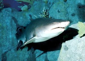 holidays in the aquarium Temaiken Zoo