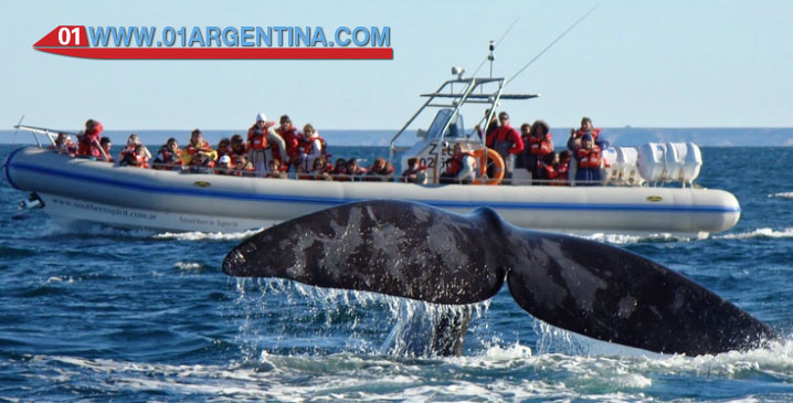 Puerto madryn tour